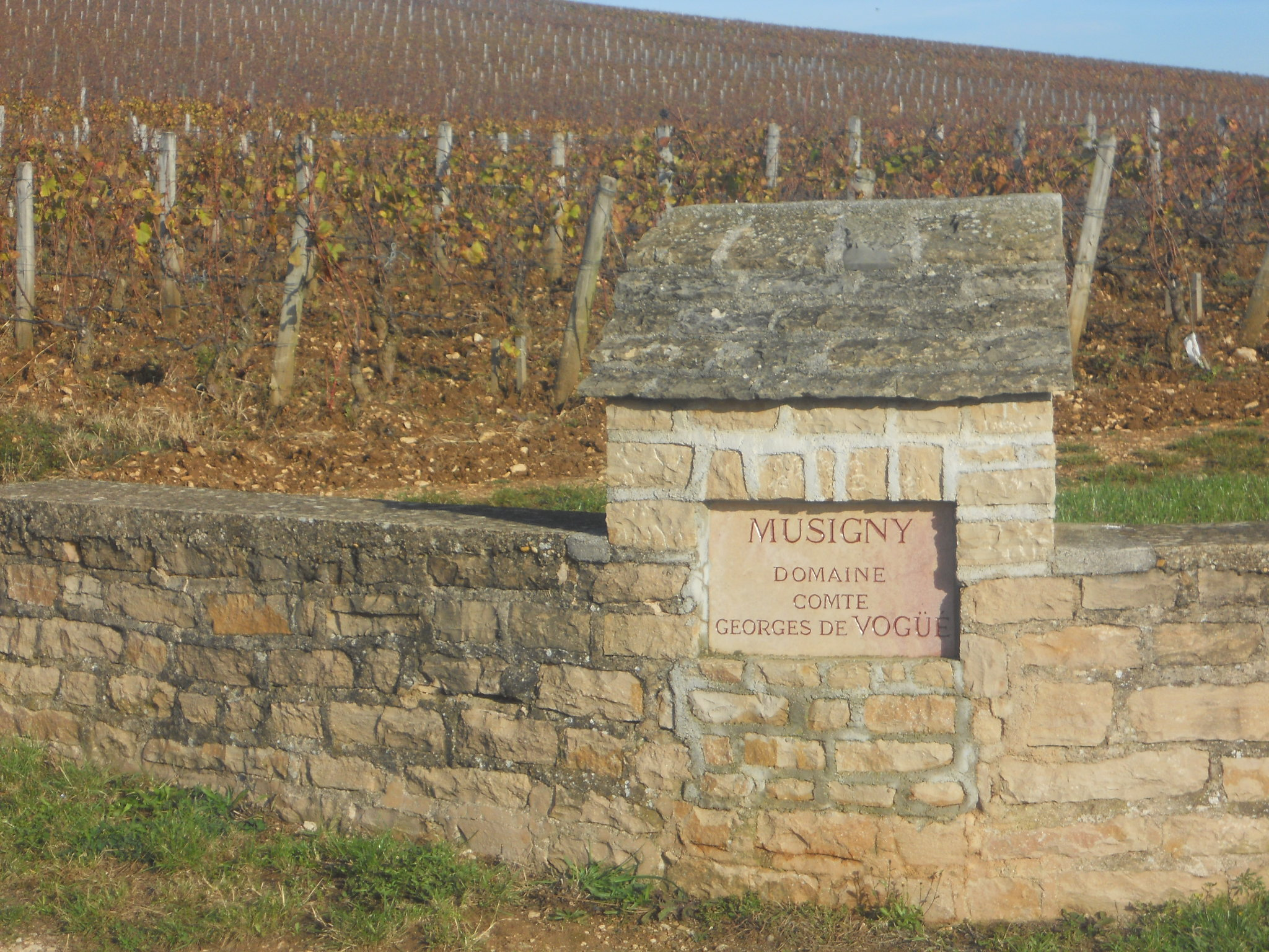 Burgundy 2011 102