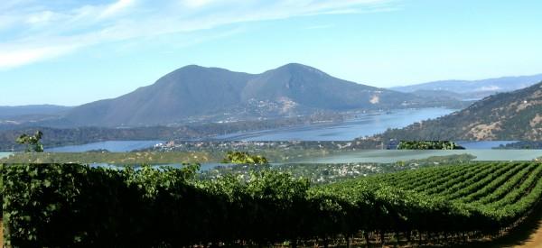 Vineyards in clear lake