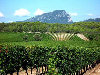 languedoc-roussillon vineyards