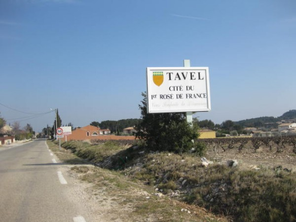 tavel vineyard