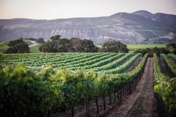 lutum wines La Rinconada