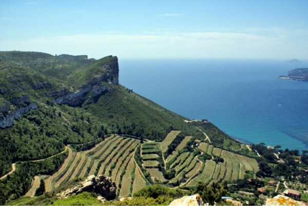 Cassis vineyard
