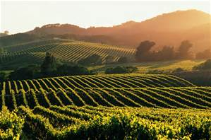 my pictures.napa valley