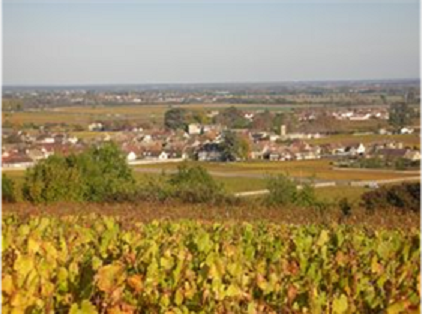 ballot millot vineyard