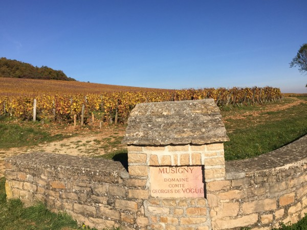 musigny vineyard and sign cdv 16