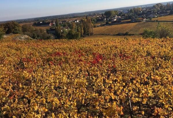 2016 Burgundy 1