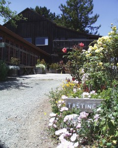 lower winery2