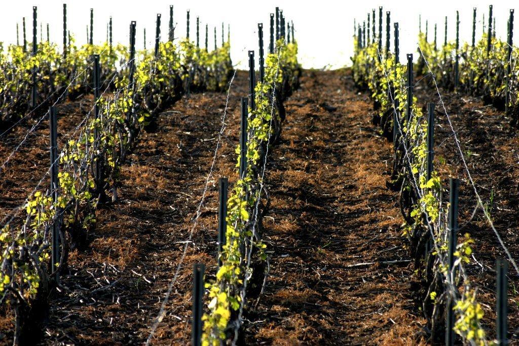 mai 08 feulles de vignes 052 (2)