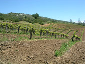 Selleck vineyard