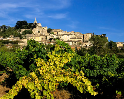 Aix-en-Provence Vineyards