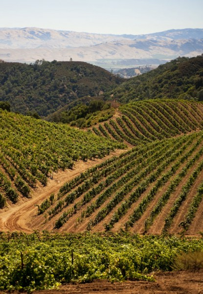 Vineyard at Calera