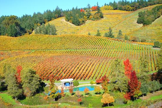 diamond-creek-vineyards