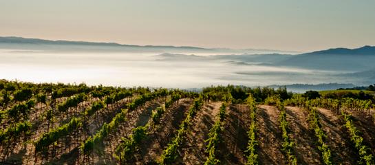 Ridge Monte Bello Vineyard