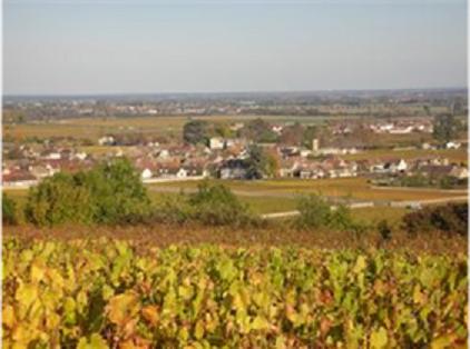 ballot millot vineyard2