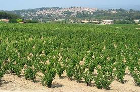 BANDOL VINEYARD 1