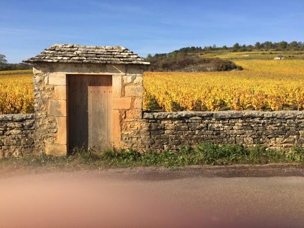 16 montrachet vineyard thenard