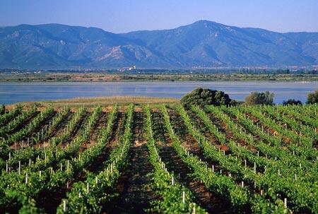 Côtes de Roussillon
