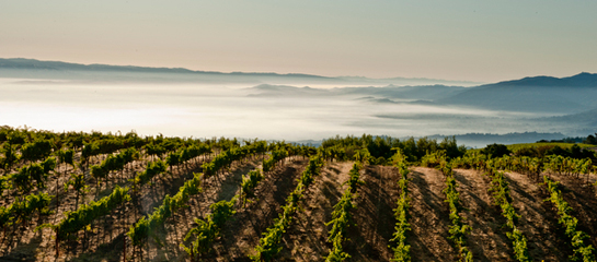 Ridge Monte Bello Vineyard